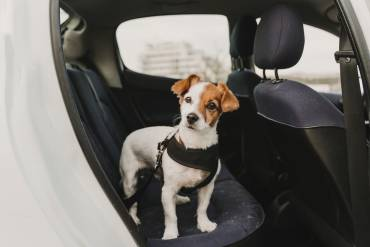 Is Curbside Veterinary Care Here to Stay?